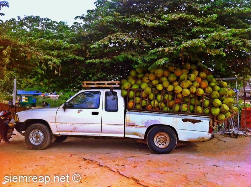 Car overloaded with coconuts