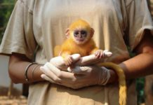 Wildlife Rescue and Rehabilitation at the Angkor Centre for Conservation of Biodiversity