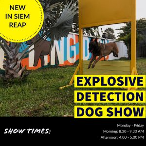 Visit the Explosive Detection Dog Show in Siem Reap!
