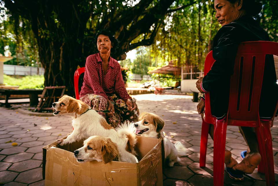 World Vets bring free veterinary services to Siem Reap in November 2017