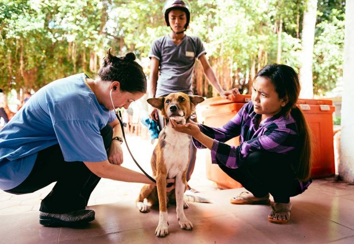 World Vets NGO brings free veterinary services to Siem Reap in November 2017
