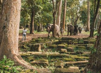 Elephants at the Angkor temples